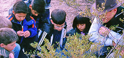 Growing Up Arid - students looking at desert plants