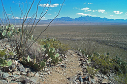 South facing slope at the Chihuahuan Desert Nature Park.